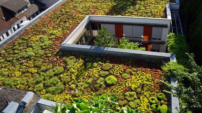 Een groen dak is in Groningen geen uitzondering meer