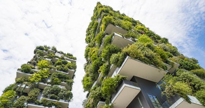 Groene daken als oplossing voor wateroverlast bij hevige regen