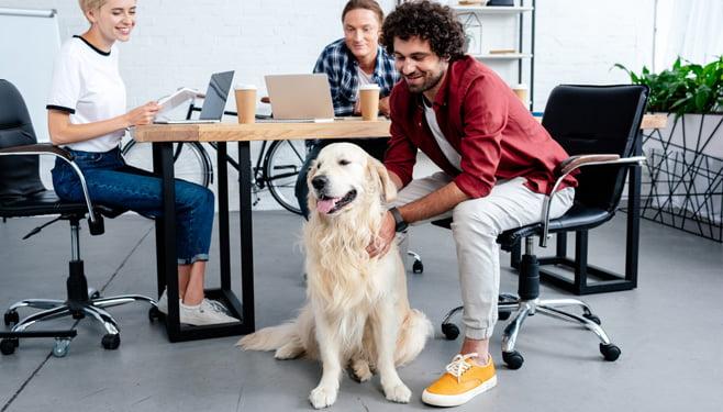 Steeds meer huisdieren doen hun intrede op kantoor