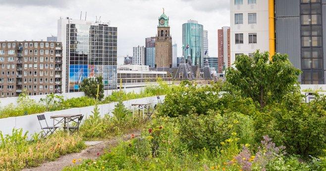 Bouwers staan voor een uitdaging Hoe houden we de natuur in de stad
