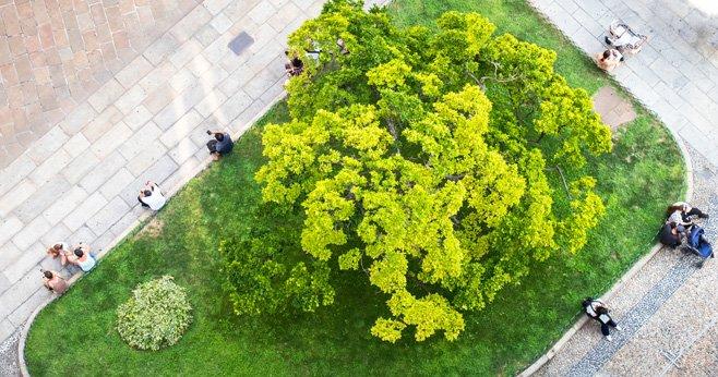 Welke bomen zijn geschikt voor onze droge steden