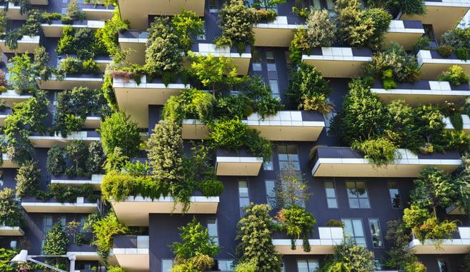 Het groendak wint aan populariteit in Amsterdam