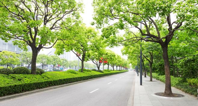 Meer groen in de omgeving kan zorgen voor minder stress in coronatijd
